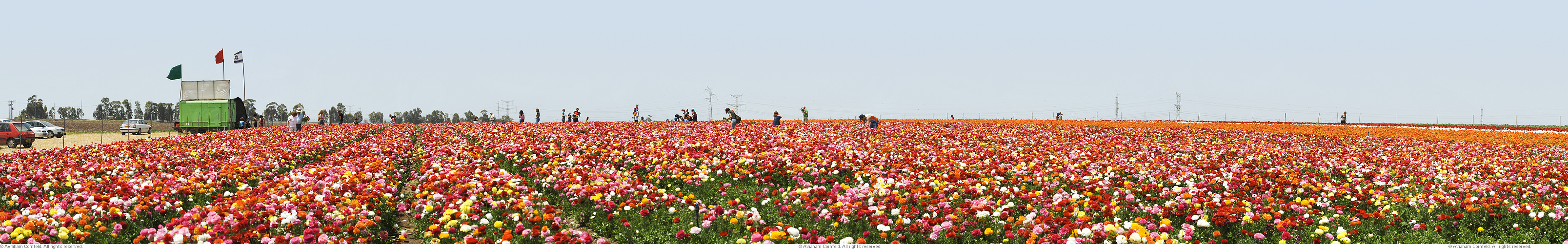 pan_flower_field