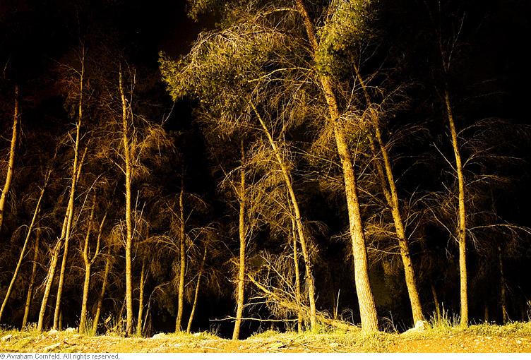 trees-(1)