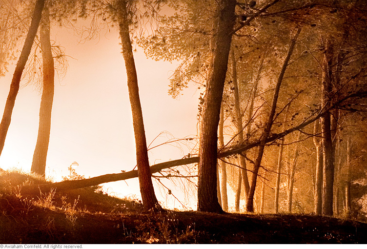 trees2-(1)